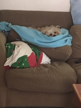 I love sleeping on top of the couch cushion, even when it's falling down.